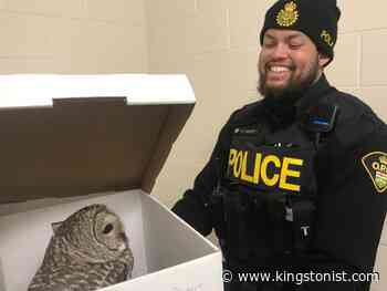 OPP officers rescue injured owl in Madoc - Kingstonist