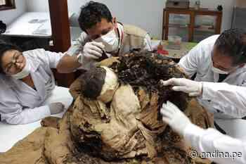 Descifrarán quién fue el personaje del fardo hallado en complejo Túcume [video] - Agencia Andina