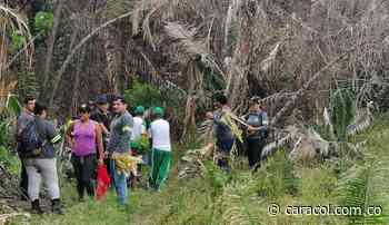 3.000 árboles sembrados en Carmen de Apicalá en Tolima - Caracol Radio