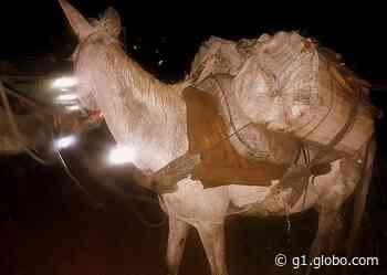 Trio é flagrado com mulas carregando centenas de palmitos-juçara extraídos irregularmente de parque estadual - G1