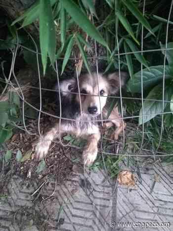 Bombeiros resgatam cãozinho preso em cerca no centro de Palmitos - Chapeco.Org