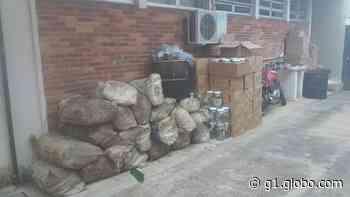 Polícia desativa fábrica clandestina de palmitos e responsável é multada em mais de R$ 400 mil em SP - G1