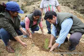 Junín: Jornada de forestación regional se realizó en Orcotuna - INFOREGION