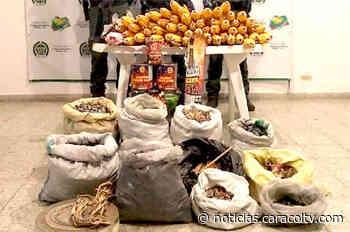 Desmantelan en Abejorral fábrica en donde se encontró media tonelada de pólvora - Noticias Caracol