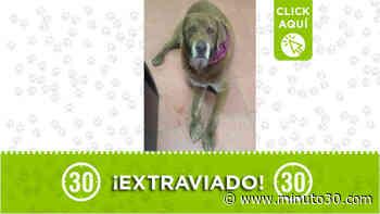 A este perrito lo buscan en Marinilla - Minuto30.com