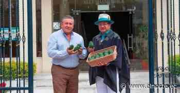 Cotacachi presente con la producción de aguacate en La Fruit Logística, Berlín 2020 - Diario El Norte