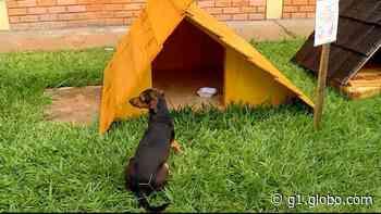 Estudantes de engenharia civil constroem casinhas para cachorros de rua, em Goiatuba - G1