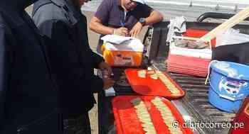 Recurso macha está en mayor cantidad desde la Punta de Bombón hasta Mollendo - Diario Correo