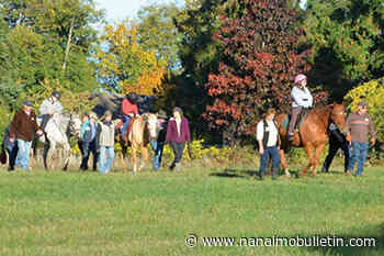 Lantzville therapeutic riding association hoping for a rise of side walkers - Nanaimo News Bulletin