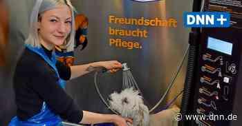 Waschsalon für Hunde - DNN-Redaktionshunde weihen die neue Hundewaschanlage in Dohna ein - Dresdner Neueste Nachrichten