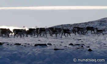 Nunavut government continues legal fight against Igloolik hunter - Nunatsiaq News