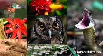 ¿Qué institución apuesta por mejorar la biodiversidad en el Bajo Urubamba? - LaRepública.pe