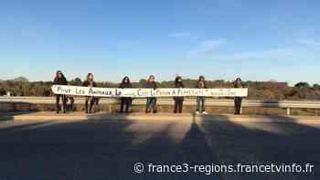 A Vendargues : devant le cirque Médrano, des manifestants militent pour la cause animale - France 3 Régions