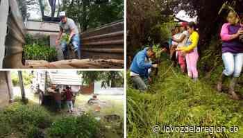 Significativa siembra de árboles, parte del balance ambiental en Saladoblanco - lavozdelaregion.co