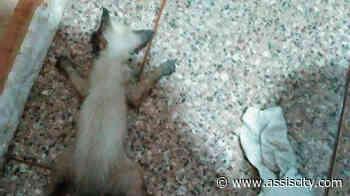 Morador denuncia envenenamento de gatos em Frutal do Campo - Assiscity