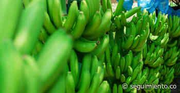 En Santa Marta y Zona Bananera se realizará Expoagrosavia, feria del sector agropecuario - Seguimiento.co