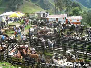 Plaza ganadera se encuentra inhabilitada en Chipaque,... - Noticias Día a Día