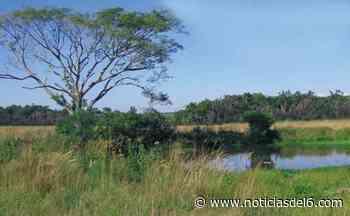 ▷ Campo San Juan: el Consejo Federal de Medio Ambiente apoyó el reclamo de Misiones - noticiasdel6.com - Noticiasdel6.com