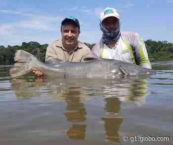 'Brutos' do rio: gigantes do Teles Pires desafiam pescadores - G1