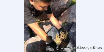 Aseguran en Acaponeta más de 20 kilos de marihuana - El Sol de Nayarit
