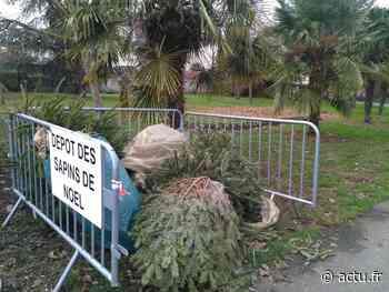 Seine-et-Marne : à Roissy-en-Brie, la Ville recycle vos sapins de Noël après les fêtes - actu.fr
