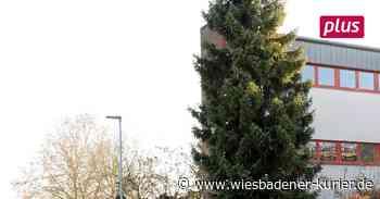 Walluf: Weihnachtsbaum darf nicht leuchten - Wiesbadener Kurier