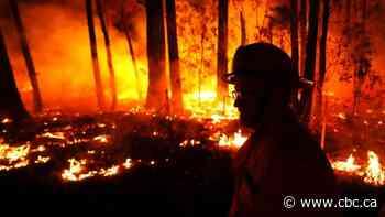 Australian man in Miramichi warns people not to forget impact of bushfires - CBC.ca