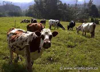 Heladas en San Miguel de Sema, Boyacá afecta 17 mil cabezas de ganado - W Radio