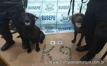 Ação na Penitenciária de Alta Segurança de Charqueadas conta com cães farejadores para interceptar arremesso de materiais ilícitos - Portal de Camaquã