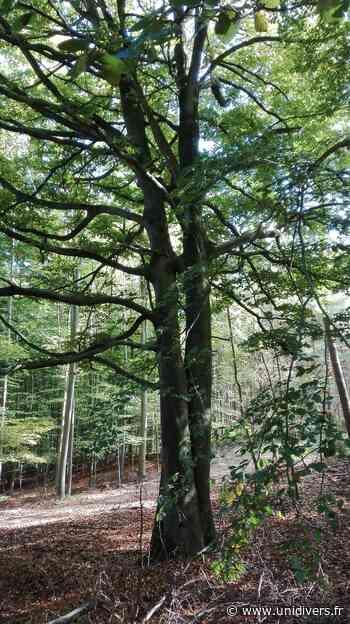 Reconnaissances des essences forestières Maison des forêts de Saint-Etienne-du-Rouvray 19 janvier 2020 - Unidivers