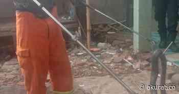 Damkar Evakuasi Puluhan Anak Ular Korba di Bekasi - akurat