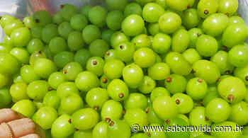 Primeira uva gourmet do Brasil é de Pilar do Sul - Sabor à Vida Gastronomia