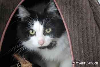 Vankleek Hill haven offers cats a second chance at life - The Review Newspaper