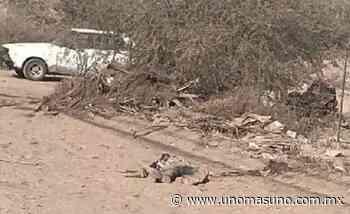 Agentes de la Fiscalía abaten a sus agresores en Torreon - UnomásUno