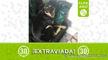 'Kina' se perdió en Enciso El Pinal, y su familia la busca - Minuto30.com
