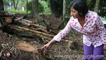 Afectación ambiental y social, el resultado de tala en Pradera Baja - La Cronica del Quindio