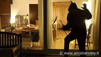 Guarda la tv in salotto, i ladri sono nella camera del figlio: messi in fuga da Thor - AnconaToday