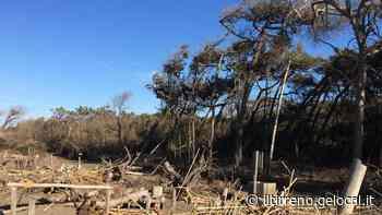 La sabbia invade la pineta del Tombolo e scatta la protesta: «Subito interventi contro l'erosione» - Il Tirreno