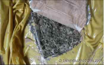 Aseguran 51 kilos de marihuana en Cocula, Jalisco. - Tala Jalisco Noticias