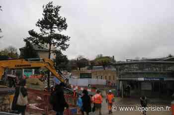 Bourg-la-Reine sauve trente pins sylvestres de la scierie - Le Parisien