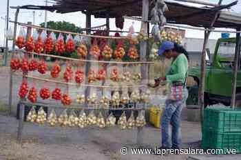 Pocas ventas de cebolla y pimentón en Quíbor - La Prensa de Lara