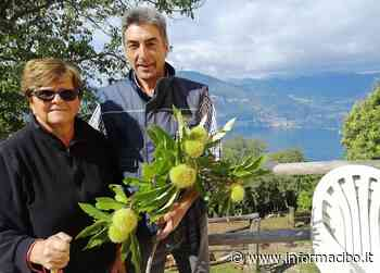 La visita al castagneto Veronesi a San Zeno di Montagna - InformaCibo - InformaCibo