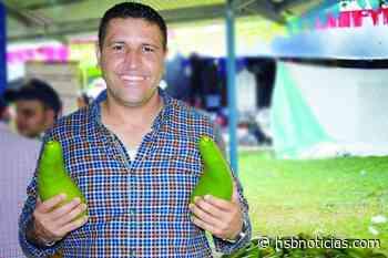 El más comedor de aguacate en El Carmen de Chucurí   HSB Noticias - HSB Noticias