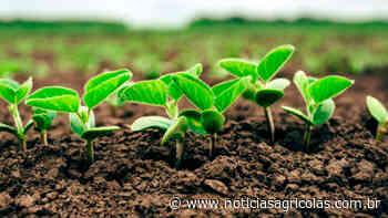 Canarana/MT sofre com chuvas irregulares e algumas lavouras de soja preocupam para safra 2019/20 - Notícias Agrícolas
