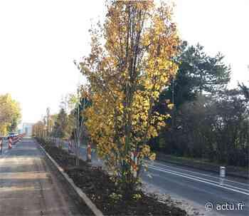 Plantez des arbres en famille à Marcq-en-Baroeul ! - actu.fr
