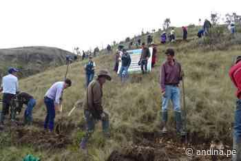 Promueven construcción de zanjas de infiltración para siembra de agua en Celendín - Agencia Andina