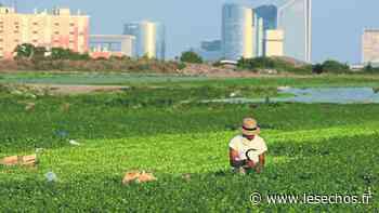 La plaine de Montesson veut préserver sa vocation agricole - Les Échos