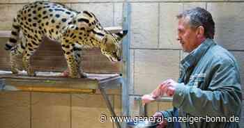Serval in Eitorf: Tierschützerin erstattet Anzeige gegen Unbekannt - General-Anzeiger