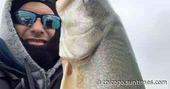 Rustem Salim caught a big lake trout perch fishing and gives some fishing tips. - Chicago Sun-Times
