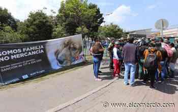 Operativos buscan prevenir la venta de cachorros en el espacio público quiteño - El Comercio (Ecuador)